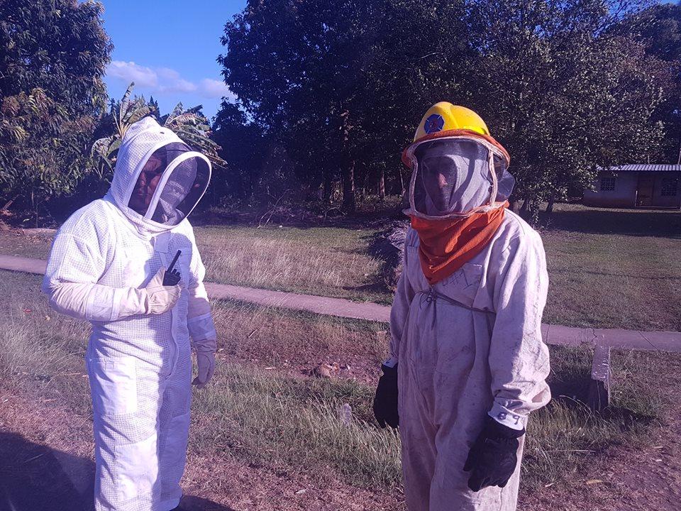 Pánico por enjambres de abejas africanas.