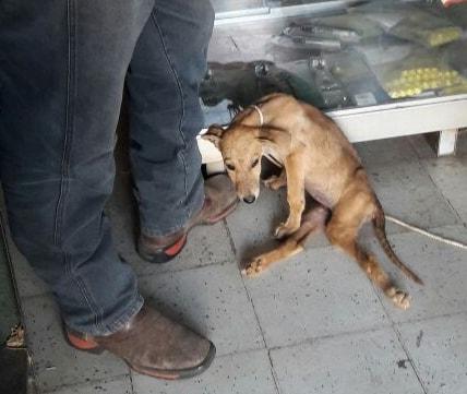 Cachorrita de 4 meses necesita atención urgente y cariño debido a el maltrato que recibía.